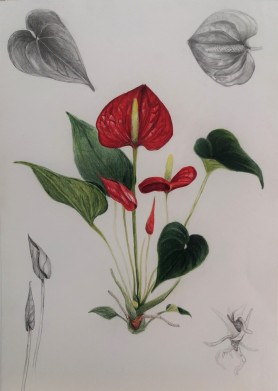 Taller IlustraNatura. Lápices de color, rotulador y grafito, de Laura