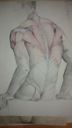 Anatomía morfológica