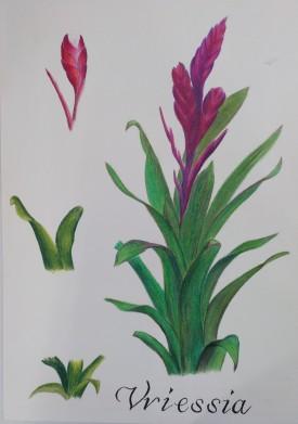 Taller IlustraNatura. Lápices de colores, de Mª Pilar