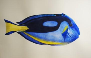 Taller IlustraNatura. Acuarela de Cristina - Pez cirujano o Paleta de pintor